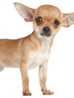 Памперсы (подгузники) для собак и кошек в Интернет