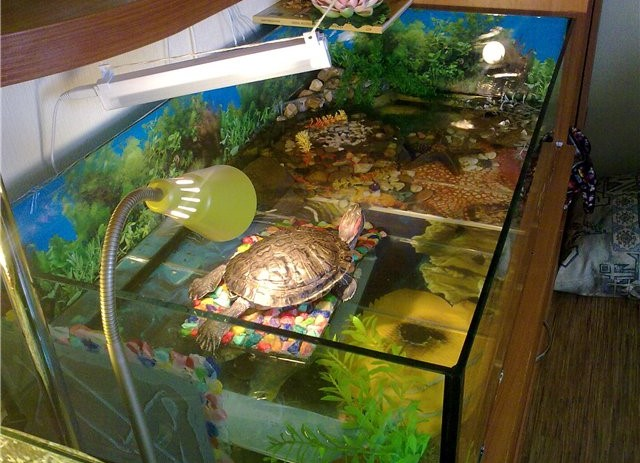 Своими руками в аквариум для черепахи фото 999