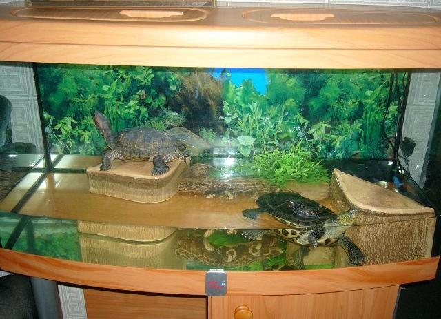 Домик для водной черепахи своими руками
