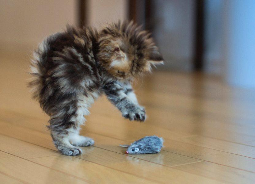 Как сделать своими руками игрушку для котят дома
