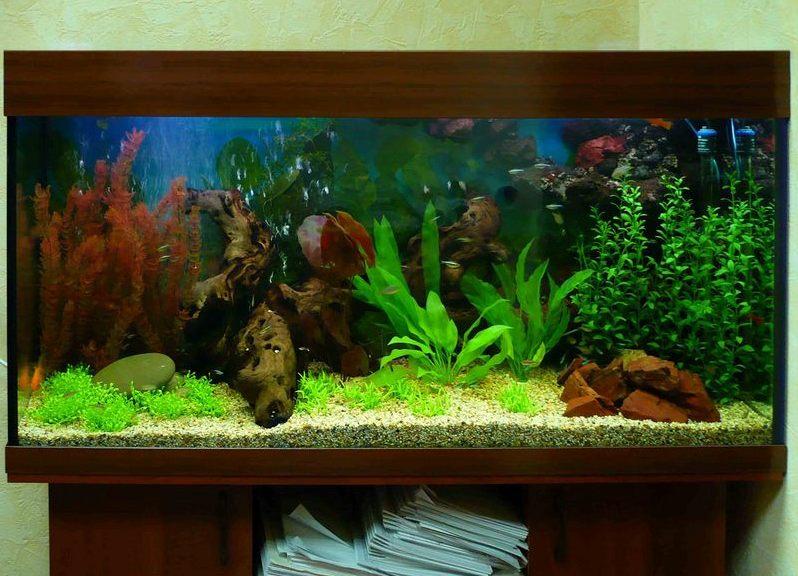 Растения для аквариума искусственные