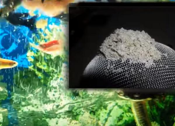 Рецепты корма для рыбок своими руками