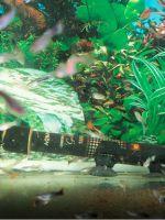 Обогреватель для аквариума с терморегулятором