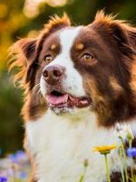 Какие капли от клещей для собак лучше?