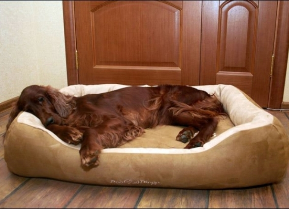 Кровати, лежанки для больших и маленьких собак