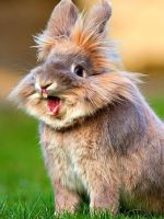Прививки кроликам - самое главное об обязательных инъекциях