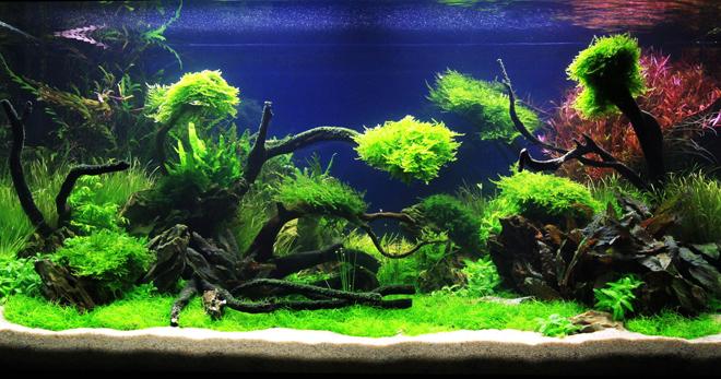 Как запустить аквариум в первый раз - советы новичкам