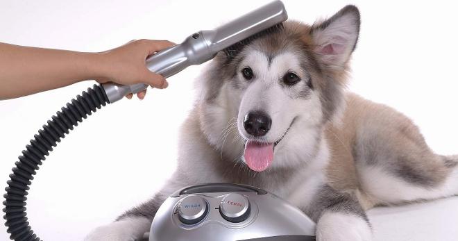 У собаки зуд и выпадает шерсть