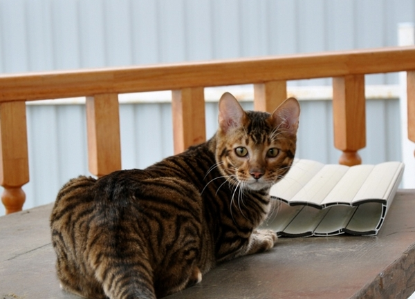 Каких котов лучше заводить в квартире