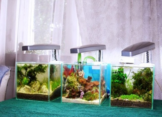 заработной платы какой нано аквариум выбрать на декретный