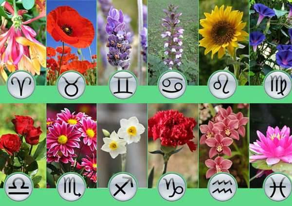 какие цветы выращивать по знаком зодиака