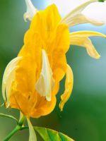 Цветок мужское счастье приметы и суеверия
