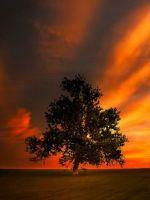 Мудры на все случаи жизни - для успеха, удачи и красоты