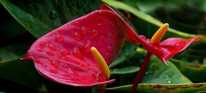 Мужское счастье цветок приметы