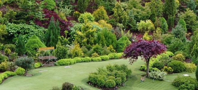 Какие деревья можно посадить на даче Фруктовые