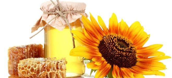 Мед подсолнечника полезные свойства и противопоказания