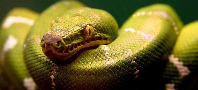 Что значит если снится змей