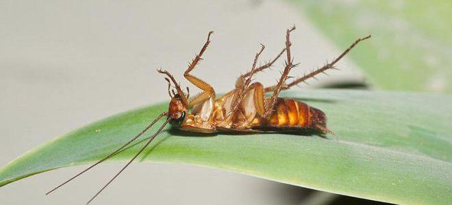 К чему снятся беременные тараканы много живые 1070