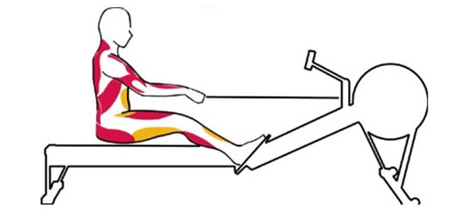 упражнения на гребном тренажере