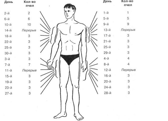 Апитерапия точки ужаливания схема