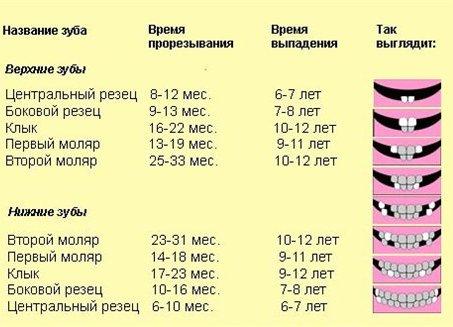 молочные зубы у детей схема 2