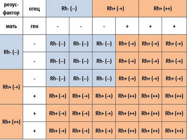 Совместимость групп крови для беременности