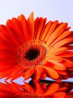 Как нарисовать цветок поэтапно?