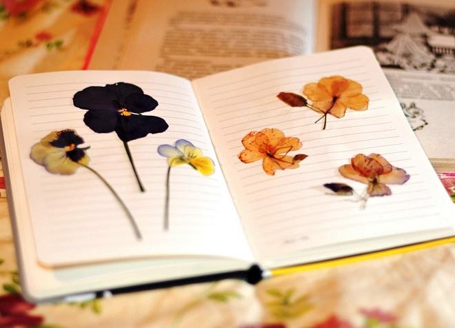 как сделать гербарий в школу12