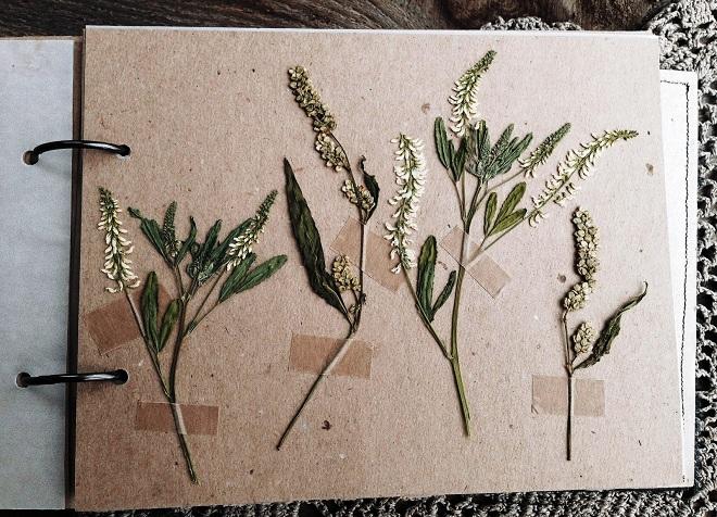 как сделать гербарий в школу13