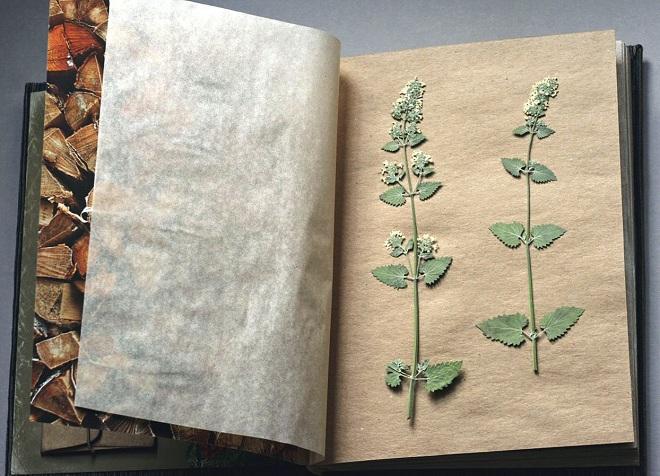 как сделать гербарий в школу19