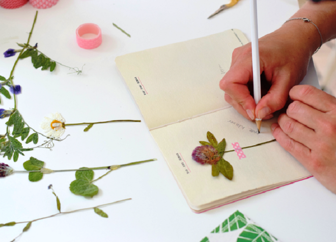 Как сделать гербарий из цветов для школы