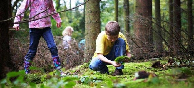 Картинка для детей правила поведения в лесу для 17