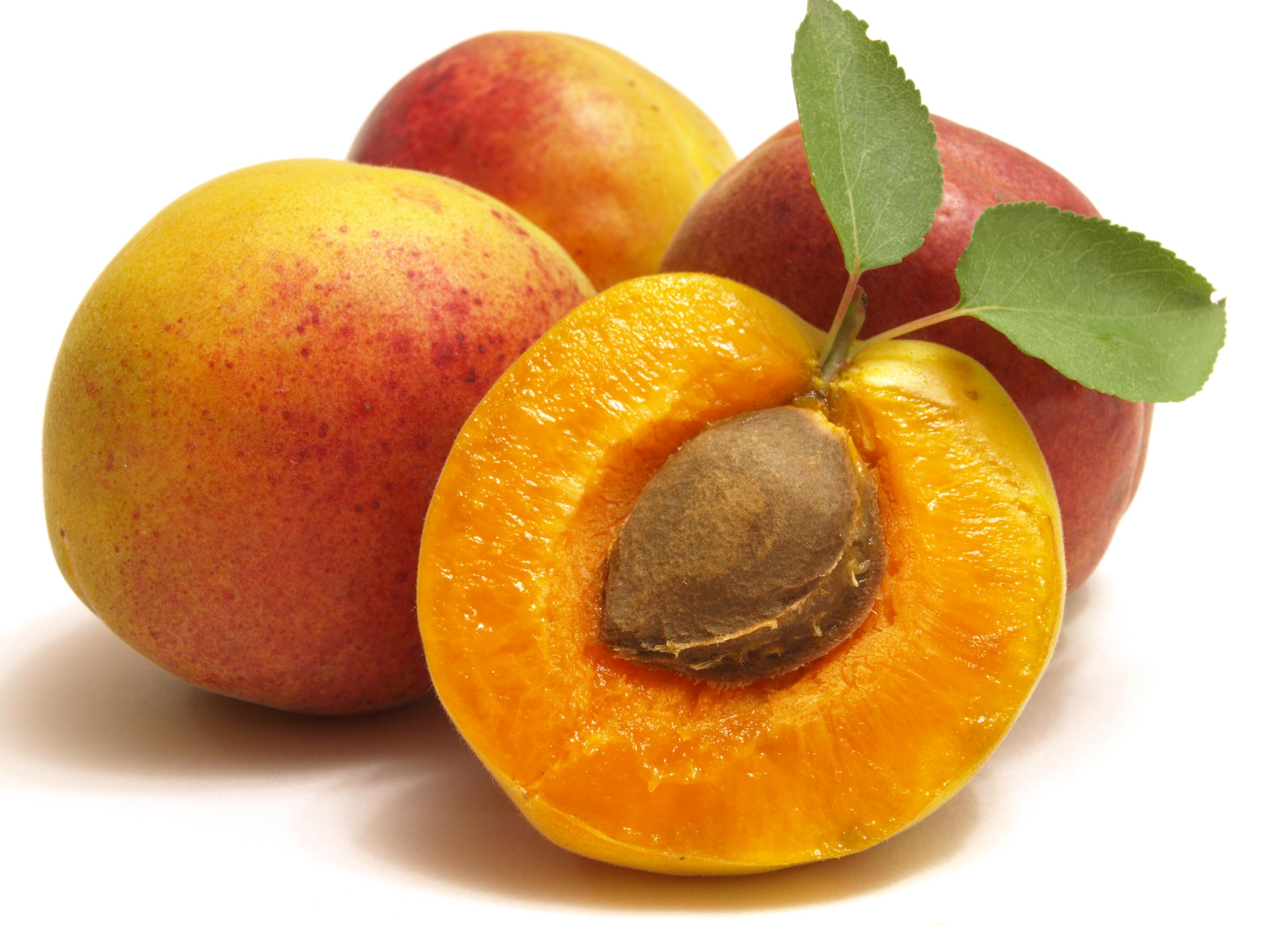Плодоношение абрикоса из косточки в домашних условиях
