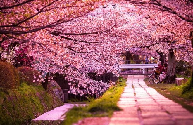 Ханами в Японии