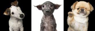 Совершенное несовершенство: снимок собак, которые не позволяется проверить минуя слёз!