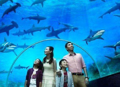 SEA LIFE Bangkok Ocean World  Siam   Bangkok Travel Guide