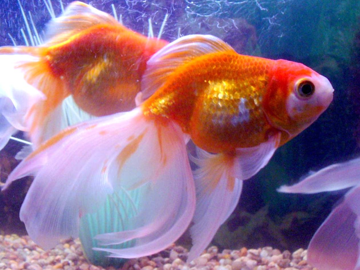 аквариумных рыбок картинки