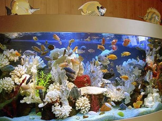 Дизайн аквариума своими руками фото 822