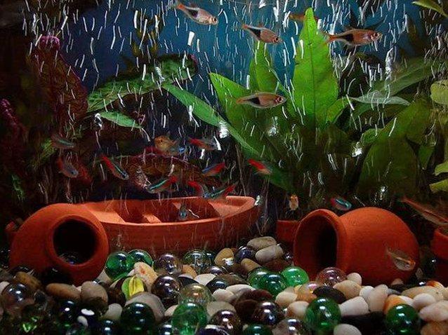 Дизайн аквариумов своими руками фото