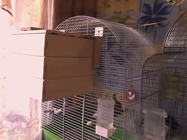 Как сделать гнездо для волнистых попугаев из коробки