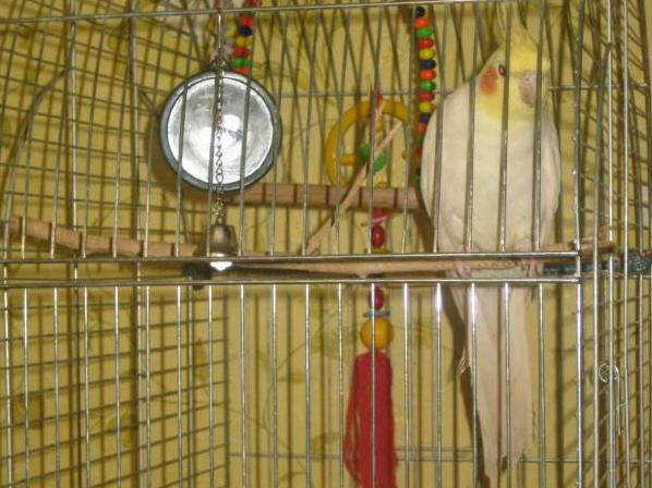 Птицы в клетке своими руками