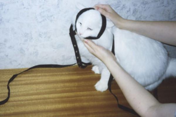 как одеть поводок на кошку