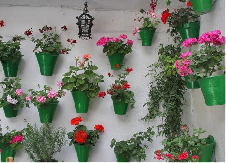 Какие цветы сажают в квартире 3