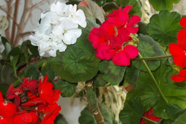 Какие комнатные цветы нельзя держать дома с фото