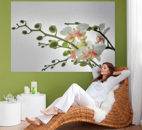 обои для стен с орхидеями фото