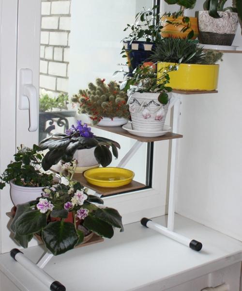 Реанимация для цветов
