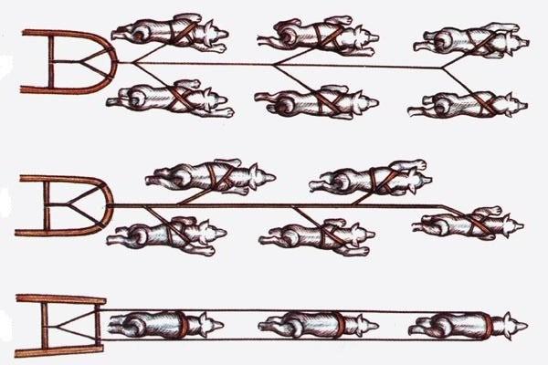 Ездовая собачья шлейка 106