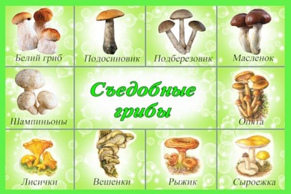 Картинки съедобные грибы и несъедобные грибы
