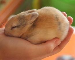 Болезни декоративных кроликов