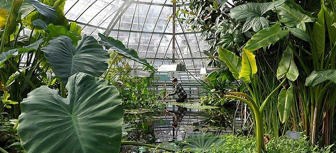 botanischer garten der universit t basel. Black Bedroom Furniture Sets. Home Design Ideas